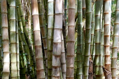 bamboo groove
