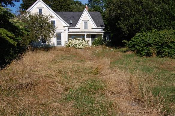 A perfect Summer Yard